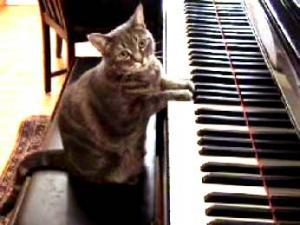 ソフィア音楽教室